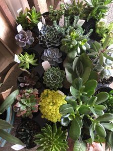 fresh succulent plants at core feed